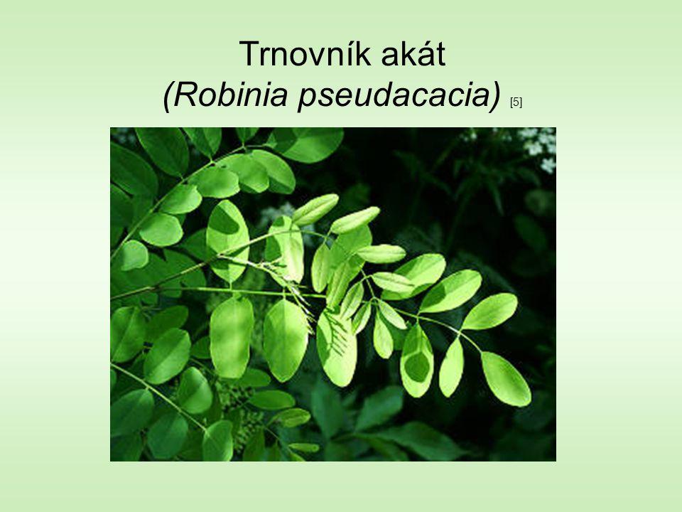 Trnovník akát (Robinia pseudacacia) [5]